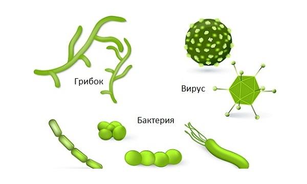 Геморрагический цистит причины появления и методы лечения