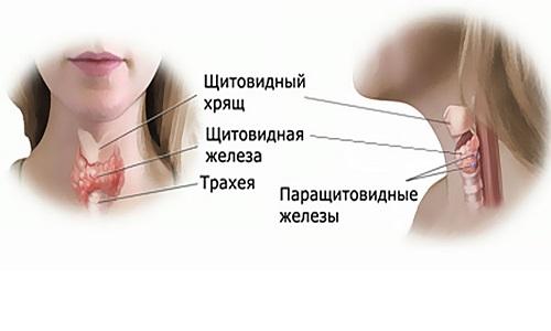 Опасность аденомы щитовидной железы заключается в следующем: повышается вероятность развития тиреотоксикоза; травматизация органов шеи