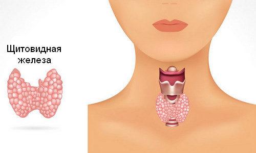 Преимуществами данного вида лечения является безопасность. Функции щитовидки постепенно восстанавливаются