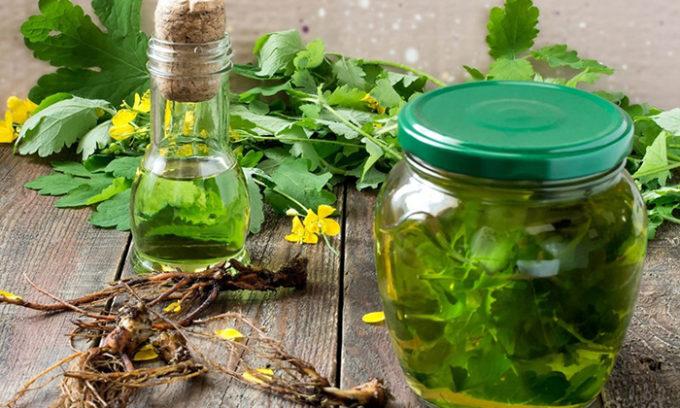 В приготовлении настойки в домашних условиях используется свежее растение. В стеклянную бутылку нужно насыпать измельченной травы, залить водкой