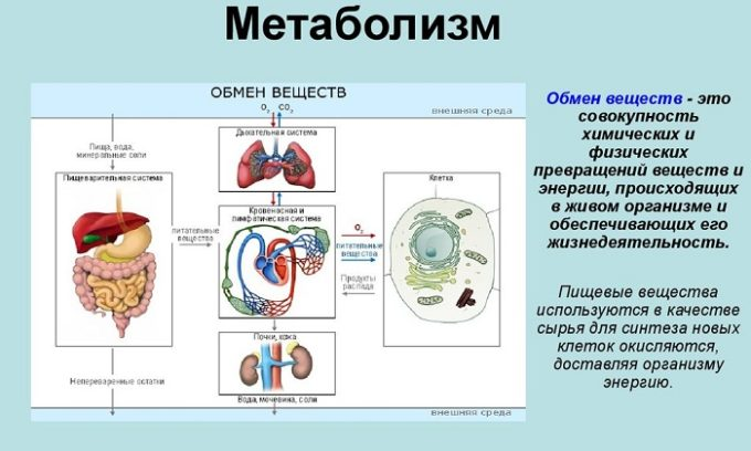 Щитовидная железа синтезирует в организме человека гормоны йодтиронин, тироксин, трийодтиронин и кальцитонин, которые участвуют в обмене веществ