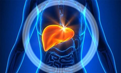 Уникальностью печени можно назвать отсутствие рецепторов, сигнализирующих о боли, которые могут возникать в результате разрушения клеток данного органа