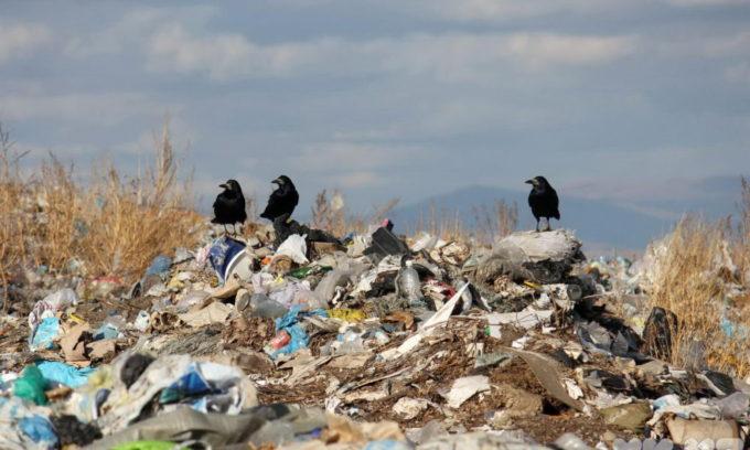 Загрязнение окружающей среды играет не малую роль в развитии заболевания гипотериозом