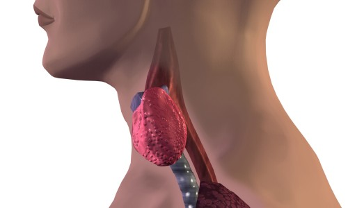 Трийодтиронин может быть повышен после лечения щитовидной железы с использованием препаратов радиоактивного йода