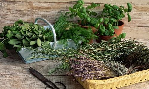 Лечить цистит эффективно народными средствами, для приготовления которых используют травы и плоды, обладающие противовоспалительным и мочегонным эффектом